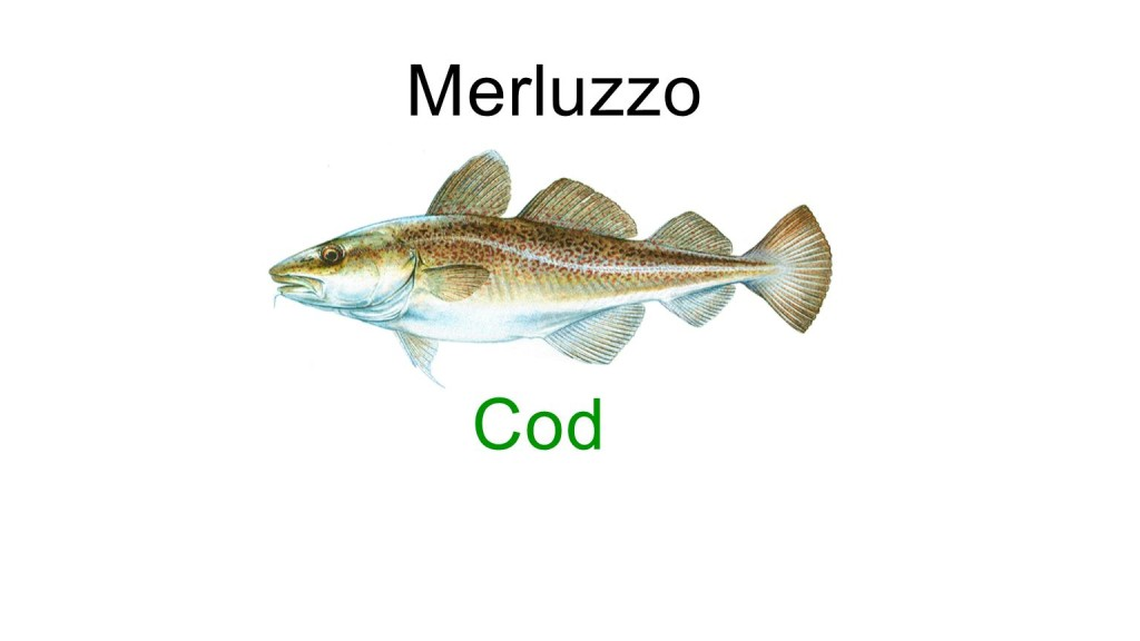 Names for fish