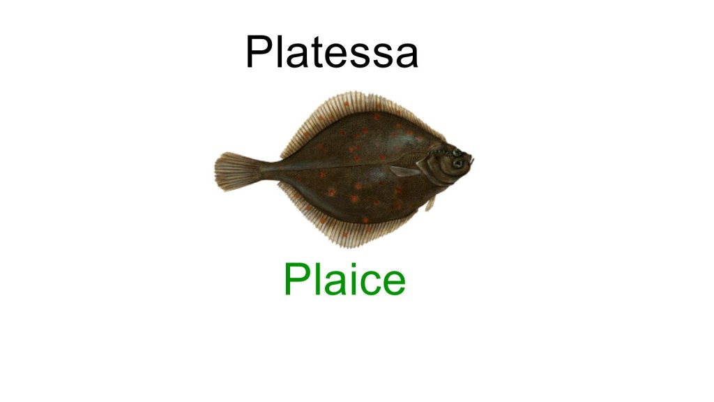 name of fishes